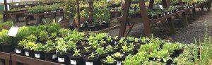 Garden Centre Ackworth
